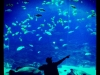 thumbs justin bieber aquarium Justin Bieber bilder